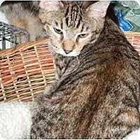 Adopt A Pet :: Tawny - Fort Lauderdale, FL