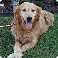 Adopt A Pet :: *Charles - PENDING - Westport, CT