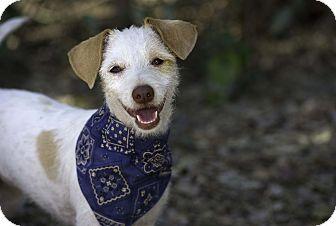 Small Breed Dog Rescue Alberta