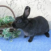Adopt A Pet :: Negrita - Bonita, CA