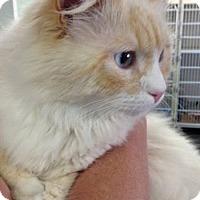 Adopt A Pet :: Toska - Davis, CA