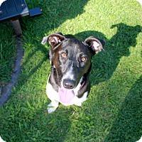 Adopt A Pet :: Pepper - Homewood, AL
