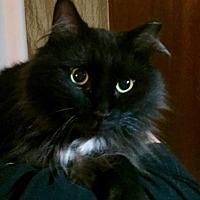 Adopt A Pet :: Debbie - Essington, PA