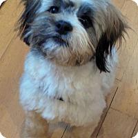 Adopt A Pet :: JACK pending - Eden Prairie, MN