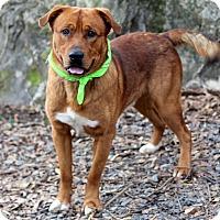 Adopt A Pet :: Bruiser - Dalton, GA