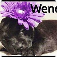 Adopt A Pet :: Wendy - Rancho Cucamonga, CA
