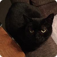 Adopt A Pet :: Midnight - Horsham, PA