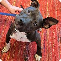 Adopt A Pet :: Tyler - Framingham, MA