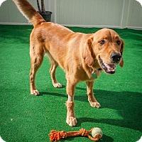 Adopt A Pet :: Charlie 691 - Naples, FL