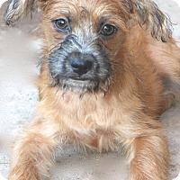 Adopt A Pet :: Enchilada - Woonsocket, RI