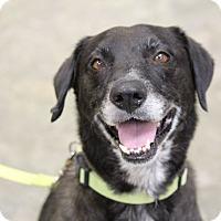Adopt A Pet :: Manta - Jay, NY