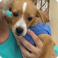 Adopt A Pet :: Mickey - Schertz, TX