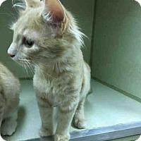 Adopt A Pet :: R2 - Waynesville, NC