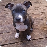 Pit Bull Terrier Dog for adoption in Crestline, California - Grace