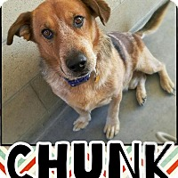 Adopt A Pet :: Chunk - Edwards AFB, CA