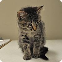 Adopt A Pet :: Rosetta - Suwanee, GA