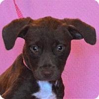 Adopt A Pet :: **VIVIAN** MEET DEC 17TH! - Mukwonago, WI