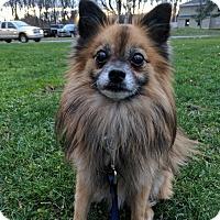 Adopt A Pet :: Cecil - East Hartford, CT