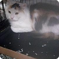 Adopt A Pet :: Aurora - Hudson, NY