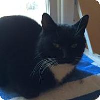 Adopt A Pet :: Theo - Okotoks, AB