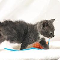 Adopt A Pet :: Boone - Murfreesboro, NC