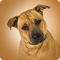 Adopt A Pet :: Betsy - Prescott, AZ