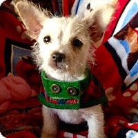 Adopt A Pet :: Luigi - Irvine, CA