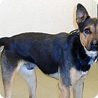 Adopt A Pet :: 334597 LF - Wildomar, CA