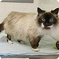 Adopt A Pet :: Maddy - Port Jervis, NY