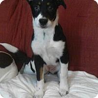Adopt A Pet :: MAGGIE MOO - Dayton, OH