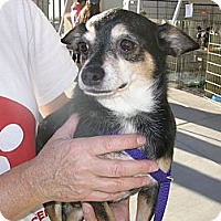 Adopt A Pet :: Edward - Las Vegas, NV