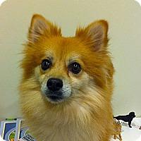 Adopt A Pet :: DAISY MAE - Minnetonka, MN