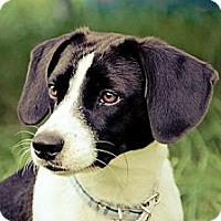 Adopt A Pet :: Charlie - Hamilton, ON