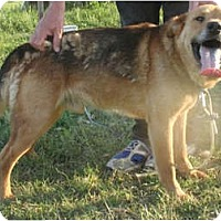 Adopt A Pet :: Bruno - Wellington, OH