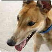 Adopt A Pet :: Ember - St Petersburg, FL