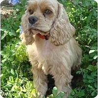 Adopt A Pet :: Robbie - Sugarland, TX