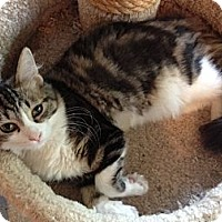Adopt A Pet :: Nikita - Byron Center, MI