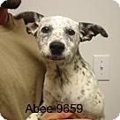 Adopt A Pet :: Abee