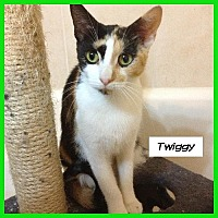 Adopt A Pet :: Twiggy - Miami, FL