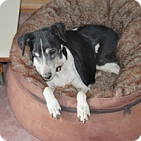 Adopt A Pet :: Teri- sponsor only - Creston, CA