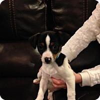 Adopt A Pet :: Tavis - Alpharetta, GA