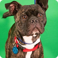Adopt A Pet :: Turbo - Berkeley Heights, NJ