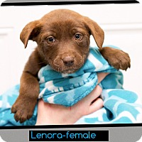 Adopt A Pet :: Lenora (pom-dc) - Hagerstown, MD