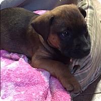 Adopt A Pet :: Don - Bernardston, MA