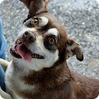 Adopt A Pet :: Ginger - Granbury, TX