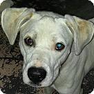 Adopt A Pet :: Casper- kids! dogs! cats!