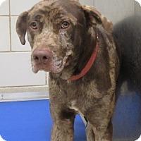 Adopt A Pet :: Reece  $20 - North Richland Hills, TX