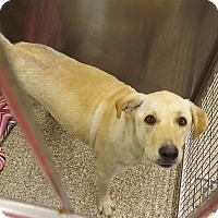 Adopt A Pet :: Doll - Yorktown, VA