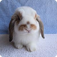 Adopt A Pet :: Morris - Fountain Valley, CA