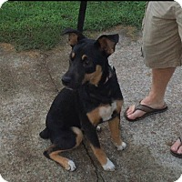 Adopt A Pet :: Simone - Waynesboro, TN